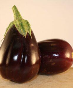 aubergine semences bio biologique semis - eggplant organic seeds