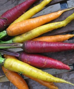 semences carottes bio semis biologique carrot organic seeds