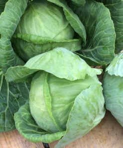 semences chou vert semis bio biologique cabbage organic seeds