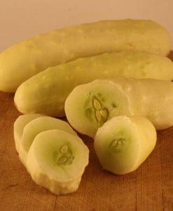 concombre semences biologique semis bio - cucumber organic seeds