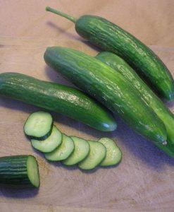 concombre libanais cucumber semences biologique bio organic seeds