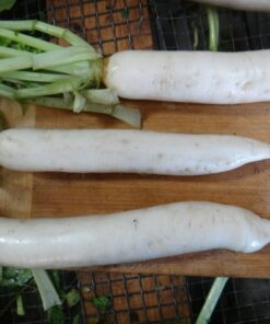 daikon radis radish semences biologique bio organic seeds