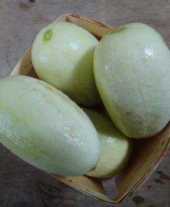 concombre dragon egg cucumber organic seeds semences bio biologiques