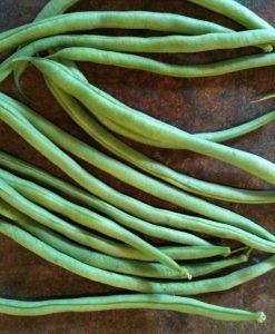 semences haricot grimpant vert bio semis biologique green pole bean organic seeds