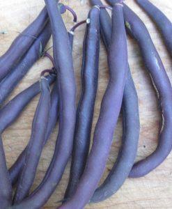 haricot nain semences bio semis biologique - bush bean organic seeds