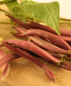 semences haricot nain rouge bio semis biologique - red bush bean organic seeds
