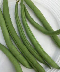 semences haricot vert nain bio semis biologique - organic green bush bean seeds
