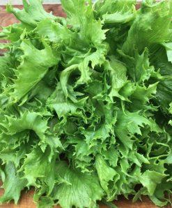 laitue lettuce semis semences seeds bio biologique organic