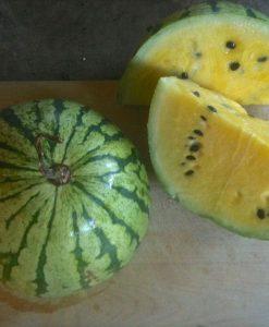 semences melon d'eau pastèque bio jaune semis biologiques - yellow watermelon organic seeds