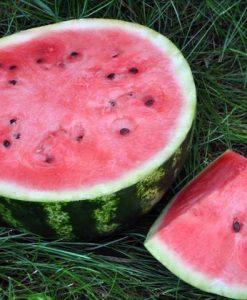 semences pastèque melon d'eau sucré bio semis biologiques - sweet watermelon organic seeds