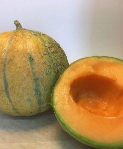 semences melon sucré bio semis biologique - melon organic seeds