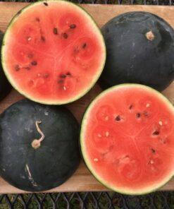 melon d'eau black mountain watermelon