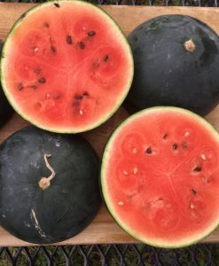 melon d'eau black mountain watermelon