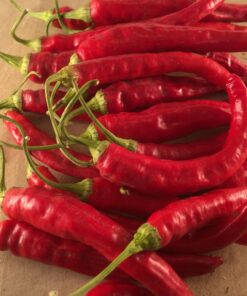 piment fort semences bio semis biologique hot pepper organic seeds