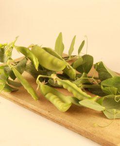 pois neige peas semences bio biologiques organic seeds