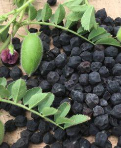 pois chiche semences semis bio biologiques cheak peas organic seeds