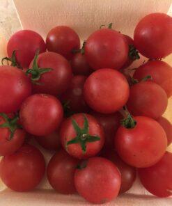 tomate cerise cherry tomato bio