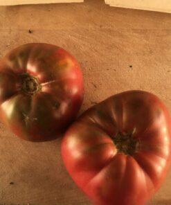 tomate mauve purple tomato cherokee