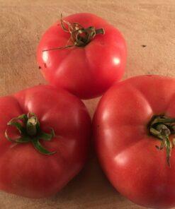 Tomate Mc Pink tomato bio biologique semences