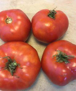 tomate moskvich tomato bio