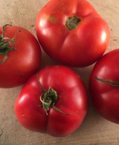 tomate tomato montreal bio biologique semences