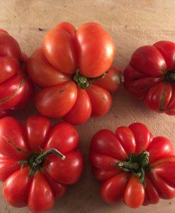 tomate tomato reisetomate bio biologique semences