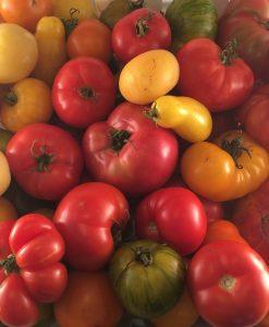 tomates mélaneg mix tomato bio biologique semences